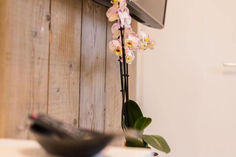 Frische Blumen im Einzelzimmer in Sankt Peter Ording